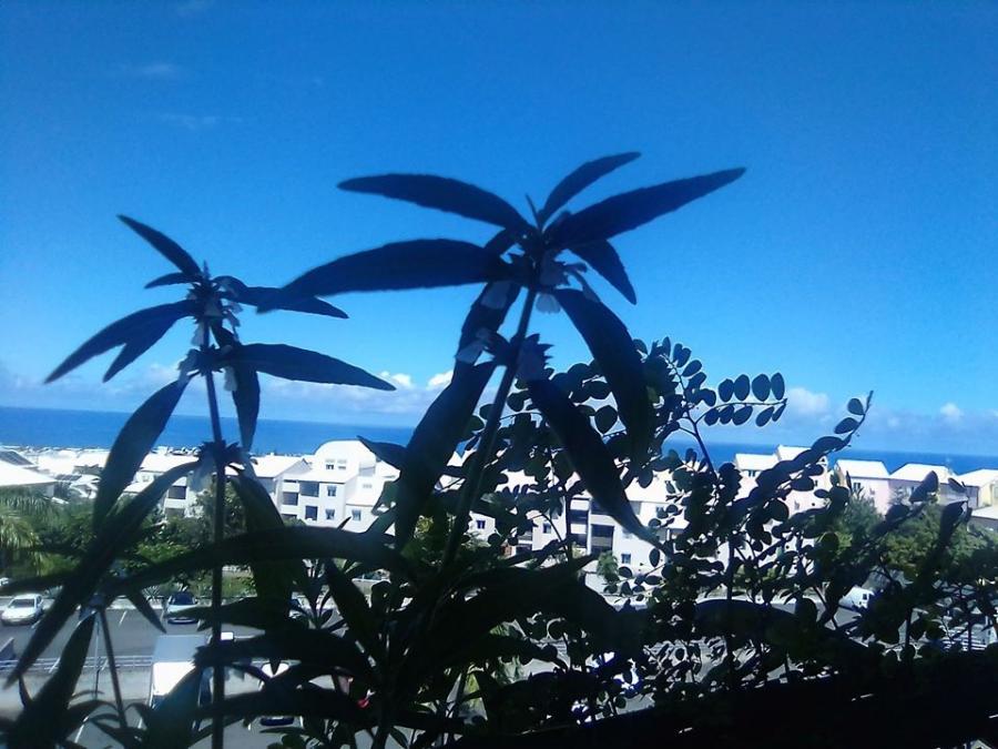 #AMAFENETRE Charlotte,Saint-Pierre (La Réunion), 31 mars