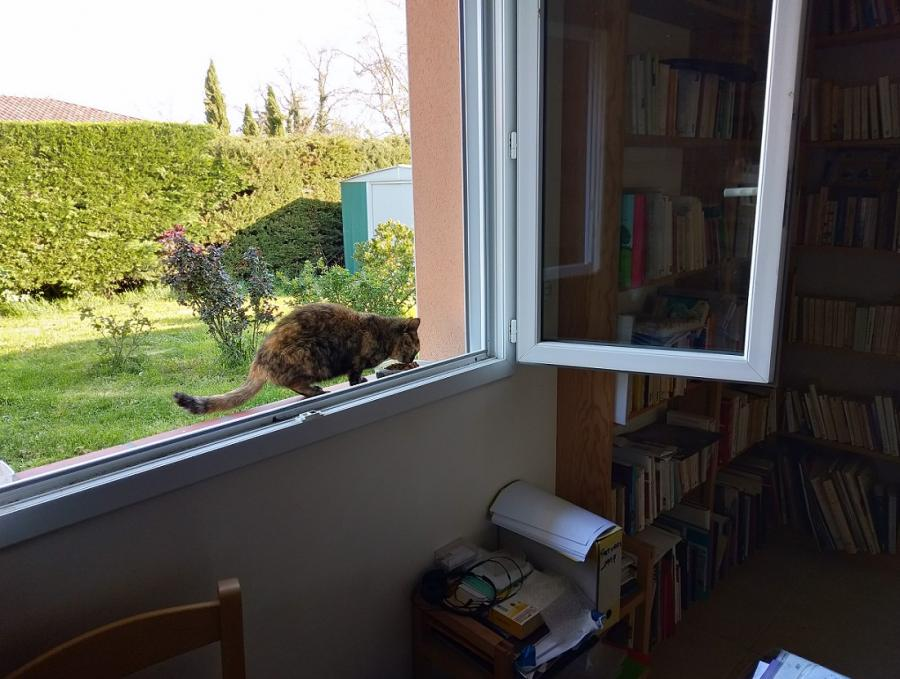 #AMAFENETRE Christian, Auterive, 25 mars / Un peu partout, les frontières se ferment. Le soleil n'y peut rien et le chat s'en fout.