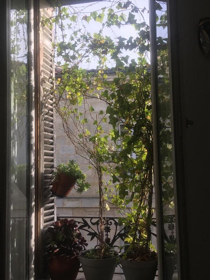 #AMAFENETRE Dile, Bordeaux, 8 mai