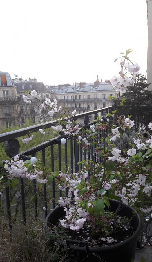 #AMAFENETRE Laurence, Paris 10e, 20 mars