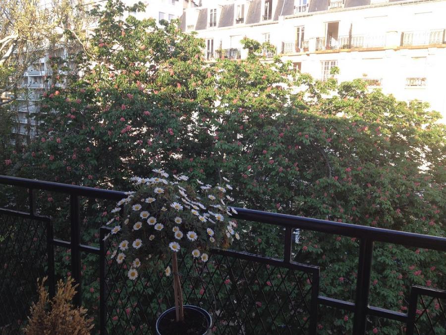 #AMAFENETRE Magali, Paris, 26 avril