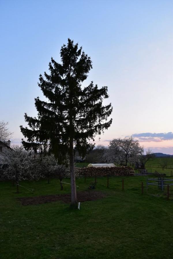 #AMAFENETRE Noémie, Vrécourt (Vosges), 8 avril