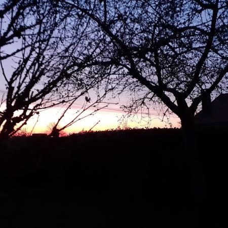 #AMAFENETRE  Catherine, Le Champion en forêt d'Othe, entre Sens et Troyes, 26 mars