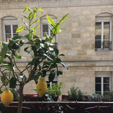 #AMAFENETRE Dile, Bordeaux, 23 mars