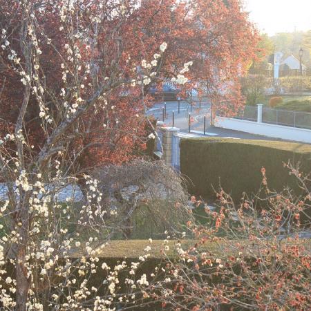 #AMAFENETRE Tiphaine, Saint-Arnoult en Yvelines, 2 avril