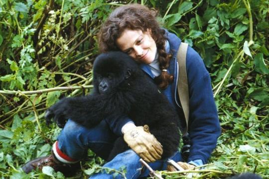 Gorillas in the Mistde Michael Apted, 1988
