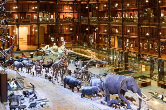 Grande galerie de l'évolution - Museum national d'histoire naturelle de Paris