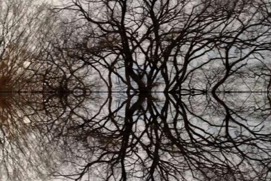 image extraite du court-métrage Poétique du cerveau de Nurith Aviv